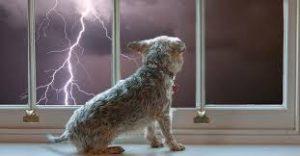 Dogs Lightening Phobia