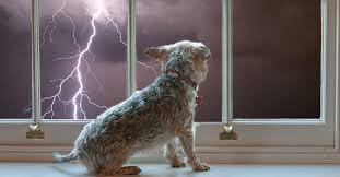 Dogs Lightening Phobia