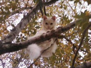 Kitten stuck in tree