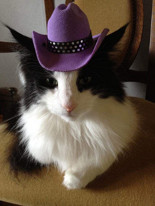 cat in a hat