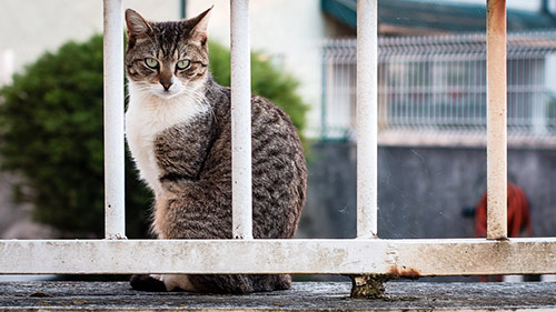 caged cat