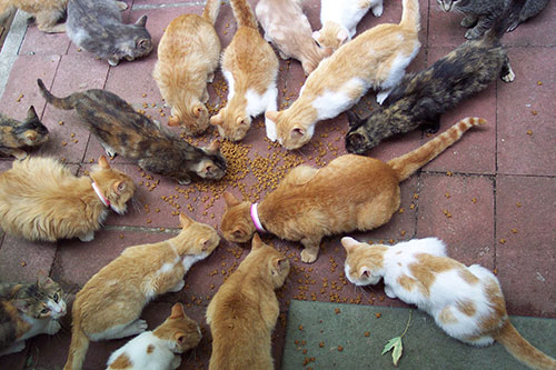 image of multiple cats eating