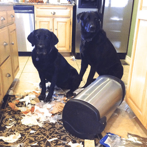 dogs eating trash
