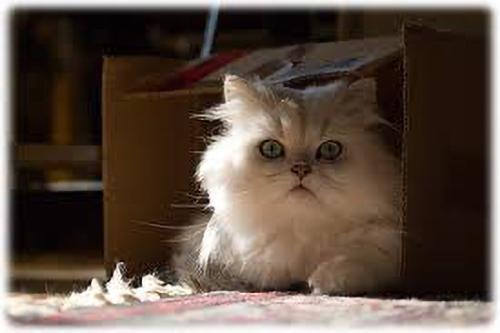 image of a cat in a box