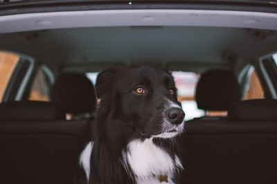 photo of dog riding in car
