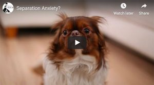 photo of anxious dog