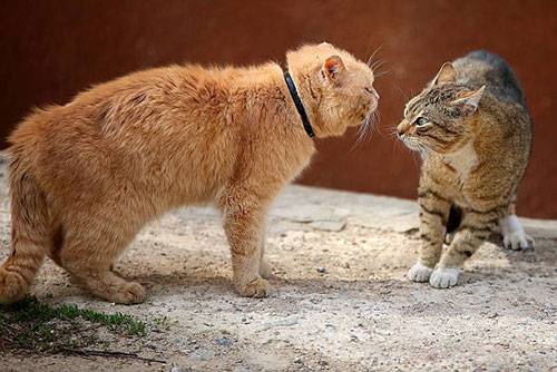photo of cats fighting