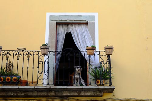 dog on terrace