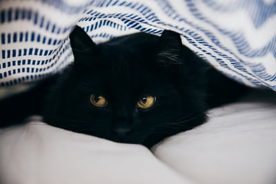black cat in a bed