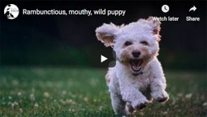 energetic puppy