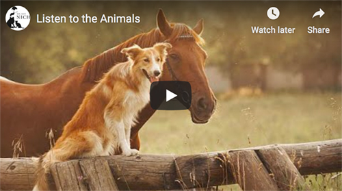 horse and dog together