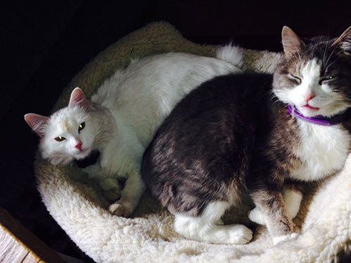 two cats sharing a bed