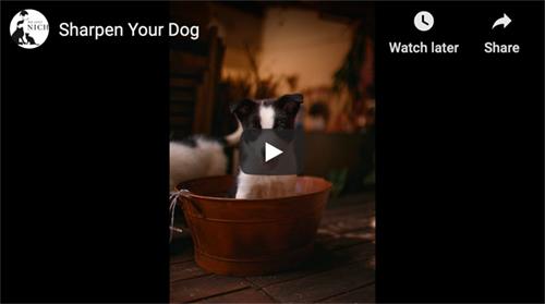 aggression on leash video