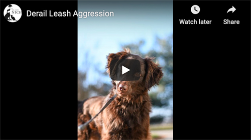 leash aggression
