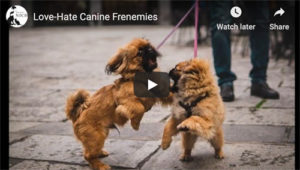 canine aggression video