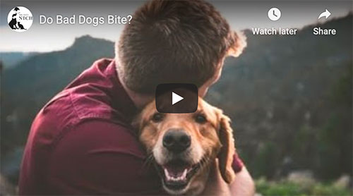 video dogs who bite