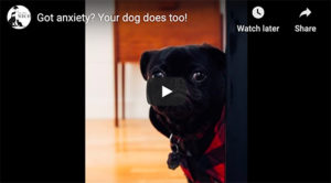 canine anxiety