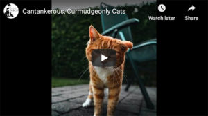 cantankerous cats video