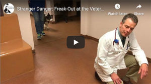 fear at the vet clinic