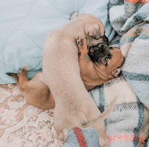 puppies wrestling
