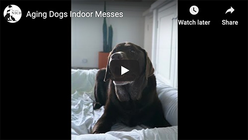 aging dogs video