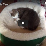 photo of a cat sleeping in a bed
