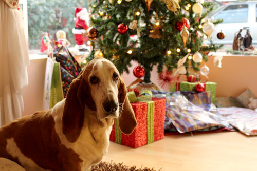 basset hound with tree