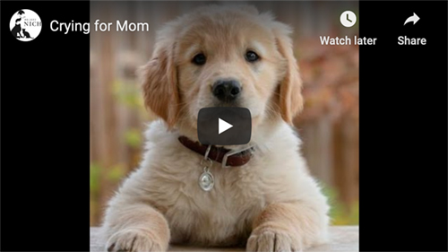 stressed puppy