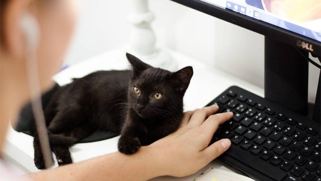 cat computer 2