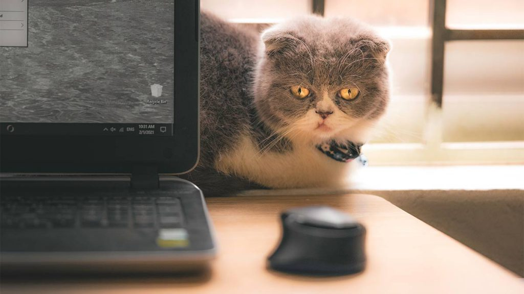 cat computer mouse