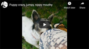 puppy nipping