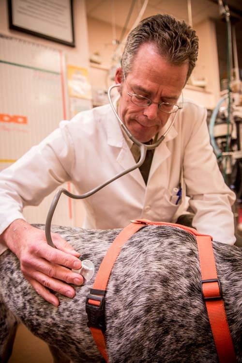 Dr. Jeff Nichol