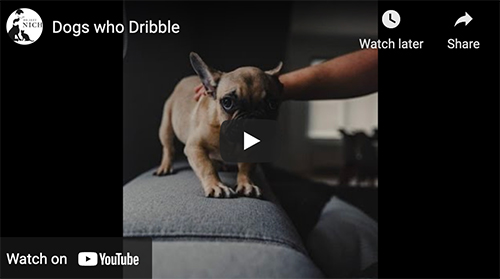 dogs who dribble video