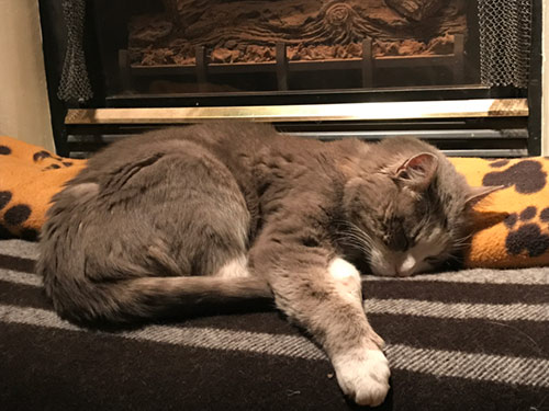 photo of cat sleeping