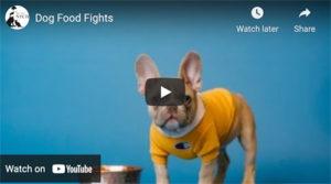 dog food fights