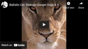 aggressive cat video