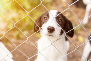photo of a dog behind a fence