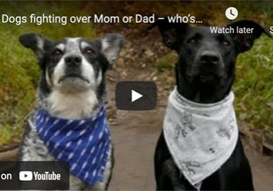 dogs fighting for attention